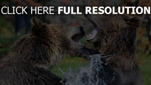 bären kampf aggression fell wasser spritzer