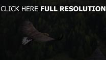 flug vogel adler wald bäume