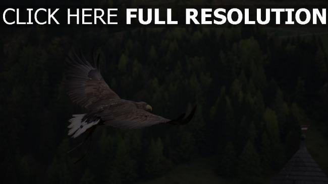 hd hintergrundbilder flug vogel adler wald bäume