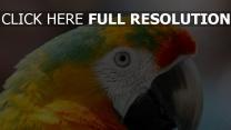 papagei schnabel blick federn farbe bunt