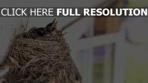 vögel küken nest schnäbel