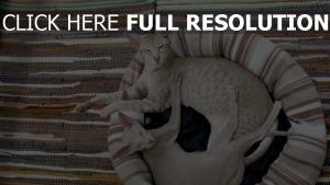 katzen paar liegen schielen matten