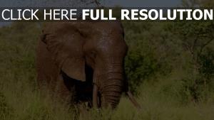 elefant schlamm wasser bäume gras