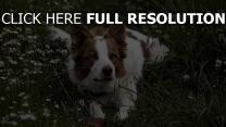 hund gras warten augen liegen