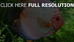 fisch schuppe farbe flossen