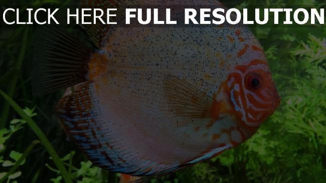 hd hintergrundbilder fisch schuppe farbe flossen