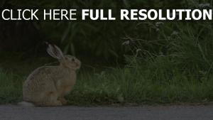 kaninchen schrecken gras hase