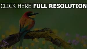 bienenfresser blume zweig vogel