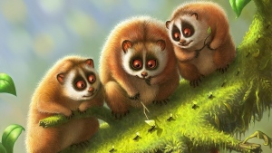 lemuren tiere moos zweig lemur