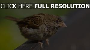 vögel schnabel gras laub baum