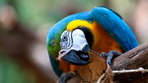 vogel schnabel bunt papagei
