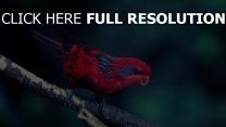 zweig sitzen vogel
