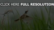 gras hintergrund fliegen vogel tapeten
