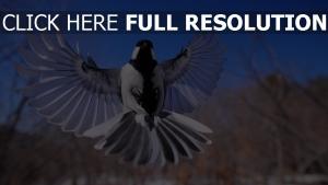 flattern flügel vogel