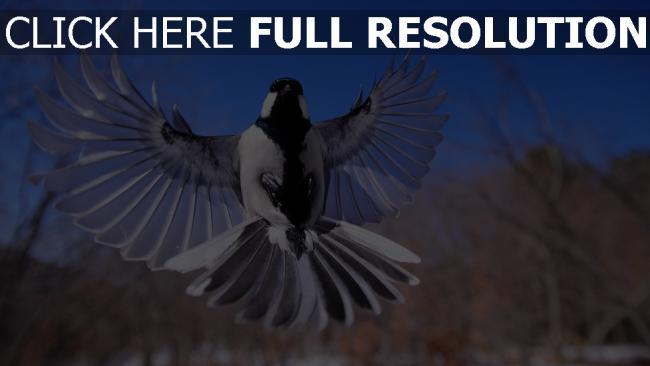 hd hintergrundbilder flattern flügel vogel