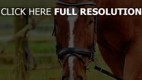 maulkorb gras zaumzeug pferd