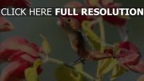 vögel blumen zweigen kolibris