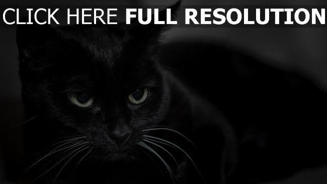 hd hintergrundbilder schnauze augen schwarze katze desktop hintergrund. Black Bedroom Furniture Sets. Home Design Ideas