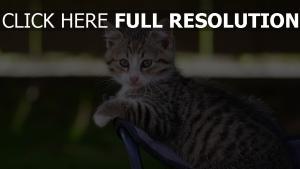 tabby schauen kätzchen