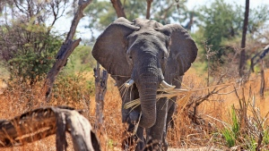 safari stamm afrika elefant