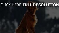 hund wind schnee setter