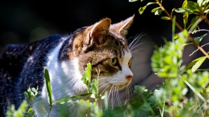 gras spaziergang ansicht katze