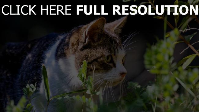 hd hintergrundbilder gras spaziergang ansicht katze