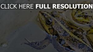 wasser flecken frosch