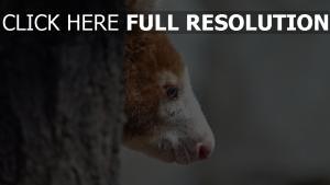 maulkorb profil holz känguru