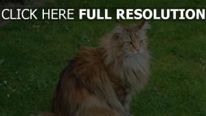 flaumig sitzen gras katze
