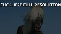 pferd himmel mähne islandpferd
