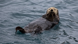 wasser nass schwimmen otter