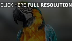 vogel bikcolor federn papagei