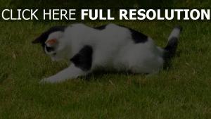 gras spielerisch beschmutzt katze