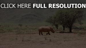 nashorn wüste bäume afrika