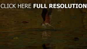 vogel flug afrika botsuana