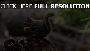 schwanz flauschige essen eichhörnchen