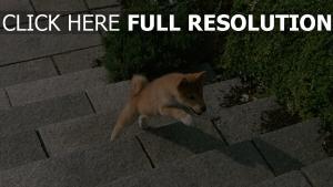hund schritte welpen