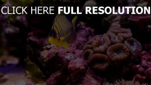 meer makro fische korallen unten