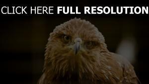 vogel schnabel adler