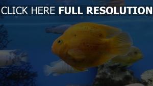 schwimmen schön fisch