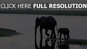 wasser schatten spaziergang elefant
