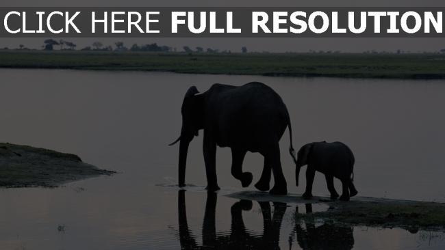 hd hintergrundbilder wasser schatten spaziergang elefant