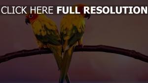 paar vögel zweig papageien