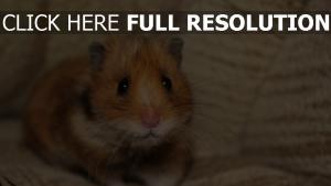 sitzen schrecken schauen hamster