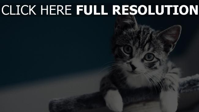 hd hintergrundbilder baby schau kätzchen
