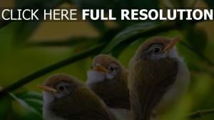 zweig laub gras vogel