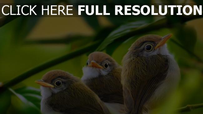 hd hintergrundbilder zweig laub gras vogel