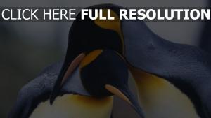 paar schnabel vogel pinguine