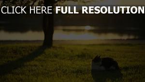 gras licht fluss katze